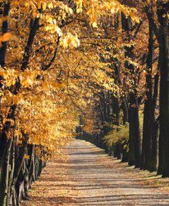 autumn_fkT7fSoO-web