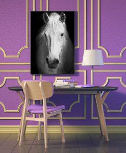 27_cavalo - Cavalo